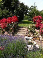 Lavender Rose Garden.  Langeland, Denmark.