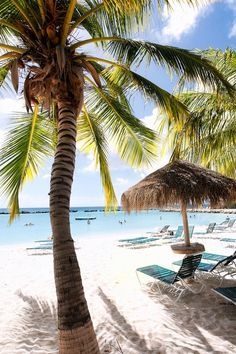 Iguana Beach with Palm Trees and Palapa, Renaissance Island, Aruba