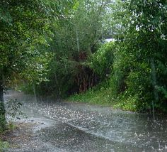 Beautiful Rainy Day   Frank Gutch Jr: Music For a Rainy Day, Free Research Turtles Download ...
