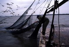 """Dale Davis attaching a """"lazy line"""" to the tail bag: Apalachicola, Florida."""