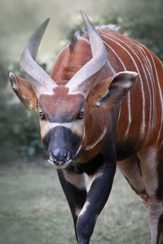 All Animals - Amazing Animals - Wild Animals Amazing Animals, Interesting Animals, Unusual Animals, Rare Animals, Animals Beautiful, Animals And Pets, Wild Animals, Animals With Horns, Tier Fotos