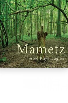 Stunning, sensitive photography of Mametz Wood taken over a period of years by photographer Aled Rhys Hughes, capturing how time has eroded and altered a place so engrained in Welsh history #Somme #Mametz