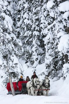 48 hours of ice magic in Lake Louise, Canada! Sleigh rides around the lake are some of the best ways to experience winter in Banff National Park.