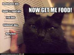 Cat reading Harry Potter by MorganaDarkness