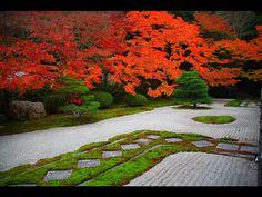 autumn with momiji