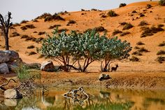 #RasAlKhaimah Nature #Beauty #UAE