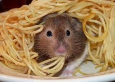 Hey hamsters, it's called SENSIBLE BITES! Ever heard of it? via via via via via via via via via via via via via via via via via via via via via Previously: Hamster Butts Pics) Hamster Eating, Gerbil, Hamster Life, Syrian Hamster, Animals And Pets, Baby Animals, Funny Animals, Cute Animals, Pets