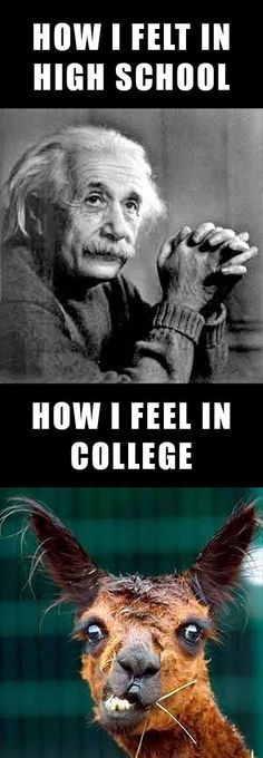 How i feel in grad school