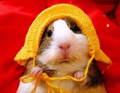 so cute with his crocheted hat
