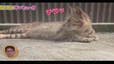 トコトン掘り下げ隊!生き物にサンキュー!!すごくかわいい子猫 #6! 2017年8月20日