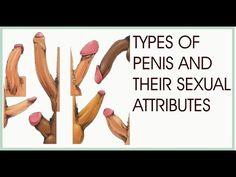 penis interior vedere este posibil să întrerupeți o erecție