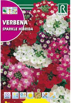 Egynyári virágok : Kerti vasfű Sparkle Hibrid szk. Verbena