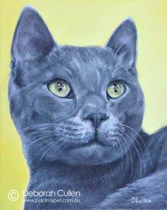 """CAT PORTRAIT Nobu Acrylic on Canvas, x x Private Commission, Tamara (Artemon, NSW) """"Nobu was a cat that acted like a dog! Completely devoted to his mama and always looking for a sleepy cuddle! My Animal, Cuddle, Pet Portraits, Sketching, Cat, Canvas, Dogs, Painting, Animals"""