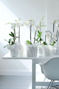 Wrapped orchid pots