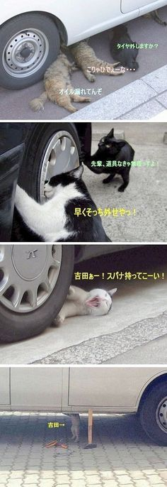 "you remove the tire?"" ""They're leaking oil."" there by removing the early ! I gotta have tool is impossible. I Love Cats, Cute Cats, Funny Cats, Funny Animals, Animals And Pets, Cute Animals, Matou, Kawaii Cat, Dog Id"