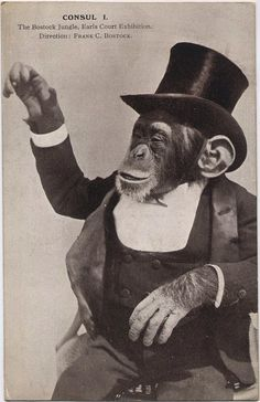 Bostock's Consul the Chimpanzee, 1908-1910. Frank Bostock was a famed 3rd generation animal trainer and menagerist. In his native England, he opened Bostock's Arena and Jungle, a huge traveling exhibition that moved from city to city.