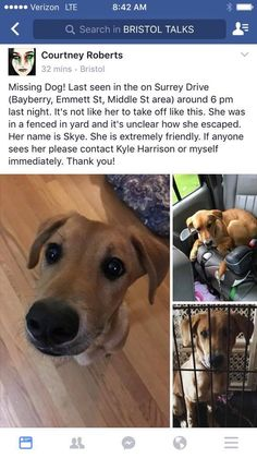Close  Tag PhotoOptionsShareSendLike Like Love Haha Wow Sad Angry Timeline Photos  Friends of the Bristol CT Animal Shelter Page Liked · 8 hrs · Edited ·   DOG HAS BEEN FOUND!   Have you seen me?