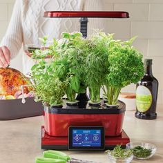 AeroGarden Harvest Touch with Gourmet Herbs Seed Pod Kit, available at #surlatable