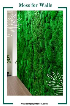 Moss walls are made from preserved mosses that require no maintenance, daylight or watering. They are one of the best sounds absorbing materials and also a totally natural product. The Bun Moss comes from Scandinavia and is A Grade Quality for Interior Design Projects and now available on a next day delivery. Get started with your moss project today!#mosswalls #mosswalls🌿 #mosswallsupplier #preservedmosswall #mosswallart #acoustics Moss Wall Art, Moss Art, Money Tree Bonsai, Board Rooms, Diy Crafts Materials, Moss Letters, Design Projects, Design Ideas, Moss Decor