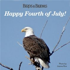 Happy Independence Day from Birds  Blooms! birdsandblooms.com
