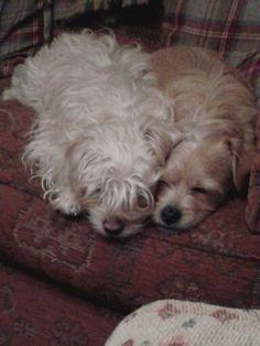 Sleepy heads flynn and rapunzel