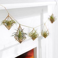 100+ Amazing Hanging Air Plants Decor Ideas https://decomg.com/100-amazing-hanging-air-plants-decor-ideas/