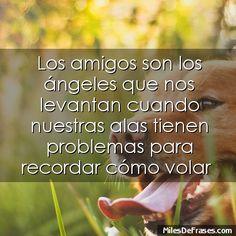 Los amigos son los ángeles que nos levantan cuando nuestras alas tienen problemas para recordar cómo volar