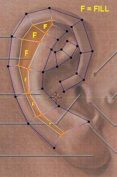 CGArena : Modeling Ears in 3D                              …