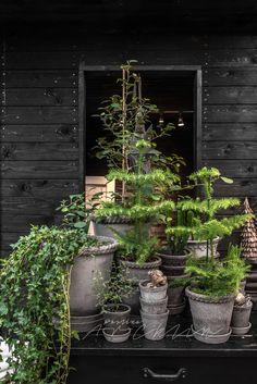 © Paulina Arcklin   HEDENTORPS PLANTSKOLA & LIV IN SWEDEN www.hedentorps.se