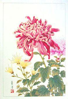 Chrysanthemum - No date - Hodo Takemura - Situsku Japanese Chrysanthemum, Japanese Flowers, Illustration Blume, Botanical Illustration, Botanical Drawings, Botanical Prints, Japanese Prints, Japanese Art, Chinese Painting