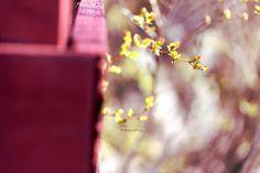 Hiirenkorvat | by Siniirr Kitty, Spring, Little Kitty, Kitty Cats, Kitten, Cats