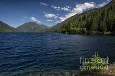 Blue and Green - Joan Carroll, Lake Crescent, Washington State. To view or purchase my prints, canvases, cards or phone cases visit joan-carroll.artistwebsites.com THANKS!