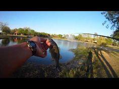 Glendover Park This Evening - Stocker Trout Fishing Stocker Trout Fishing