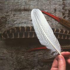 Feathers from www.kullholen.se