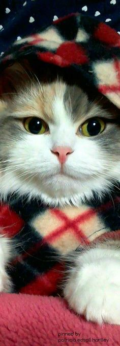 Wow! Amazing kitty ✿⊱╮