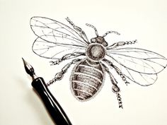 Original Bee Illustration in India Ink on Archival Paper, Hand Drawing Naturalist Art