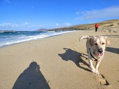 In March 2017 Graham and I, along with our friends Jo and Michael, flew to Harris in the Outer Hebrides to join our friends John and Maria at a stunning holida Isle Of Harris, Outer Hebrides, Photo Story, Labrador Retriever, About Me Blog, Holidays, Beach, Dogs, Animals