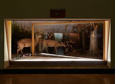 Museum's Wildlife Exhibits Extend Into Observation Area - My Modern Metropolis