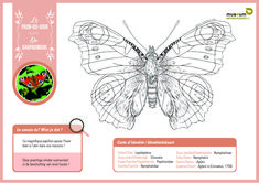 """Bring some colour into your life with these scientifically sound colouring pages! 🎨🦋 For both kids and adults 😊   Did you know that drawings are often used in entomology (""""insect-ology"""")? Some physical characters are not always clearly visible on a photo. With the help of drawings, we can get a better idea of the shape and structure of the animal or characteristic being examined 🤓 Peacock Butterfly, Edd, Colouring Pages, The Help, Photo And Video, Cycle 3, Museum, Characters, Shape"""