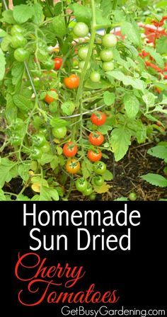 Wow, this is awesome! I usually end up throwing away a ton of cherry tomatoes every summer because we can't eat them fast enough. No more of that! I'm going to use them to make homemade sun dried tomatoes this year. It looks super easy. So excited to try this!