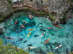 Florida- kayak trip- north of St Petersburg. 1 of 10 must see places in the world . possibly a very memorable thing to do on our October 2015 planned Florida vacation with Melissa and the kids. Three Sisters Springs Florida, Florida Springs, Blue Springs, Crystal Springs Florida, Natural Springs In Florida, Crystal River Florida, Vacation Destinations, Dream Vacations, Vacation Spots