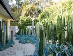 Mid-Century Modern Landscaping -- Built in 1954 Beverly Hills by mid-century starchitect Richard Neutra, the years did not treat the Kronish House kindly.