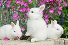 Bunnies lovers