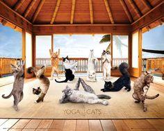 #yoga #cats