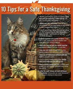Happy Thanksgiving!! 10 Tips to keep pets safe!!