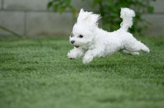 Beautiful and cute a dog breeds what you like as pet. Taket it now! #picture #photo #wallpaper