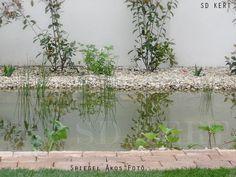 Kertépítés ötletek Plants, Plant, Planets