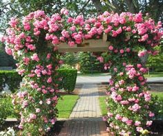 Hamptons.com | Lifestyle | From The Garden | It's Rose Season! A Few Tips On How To Get Started