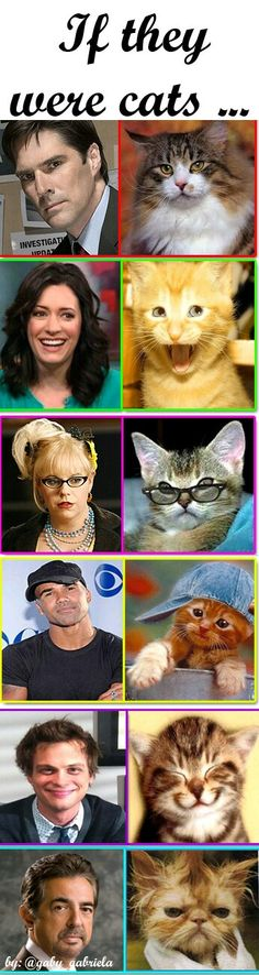 If Criminal Minds cast were cats Criminal Minds Funny, Criminal Minds Cast, Spencer Reid, Crimal Minds, Idole, Matthew Gray Gubler, Figure It Out, Best Shows Ever, Favorite Tv Shows