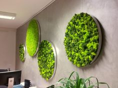Round moss pictures with aluminum frame and reindeer moss - elements earth Green Wall Decor, Plant Wall Decor, Moss Wall Art, Moss Art, Island Moos, Home Interior Design, Interior Decorating, Vertical Garden Wall, Decoration Plante